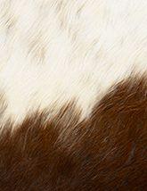 Capelli Natural Dark Brown White 165x214