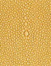 Shagarrett Sponge 165x214